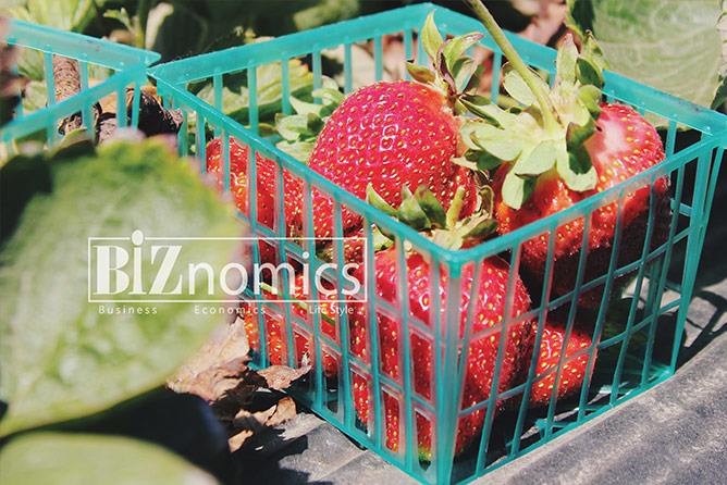 strawberry-BiZnomics-Business-3
